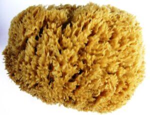 Sponges Natural Unbleached Greek Sea Sponges Many Types