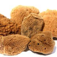 Fina silk sponges