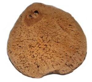 a macho fina sponge