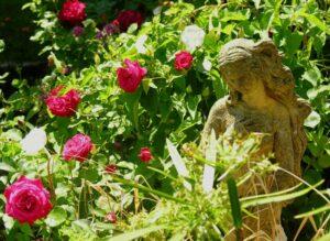 statue in rose garden
