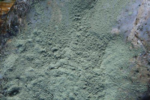 Organic Cassia powder