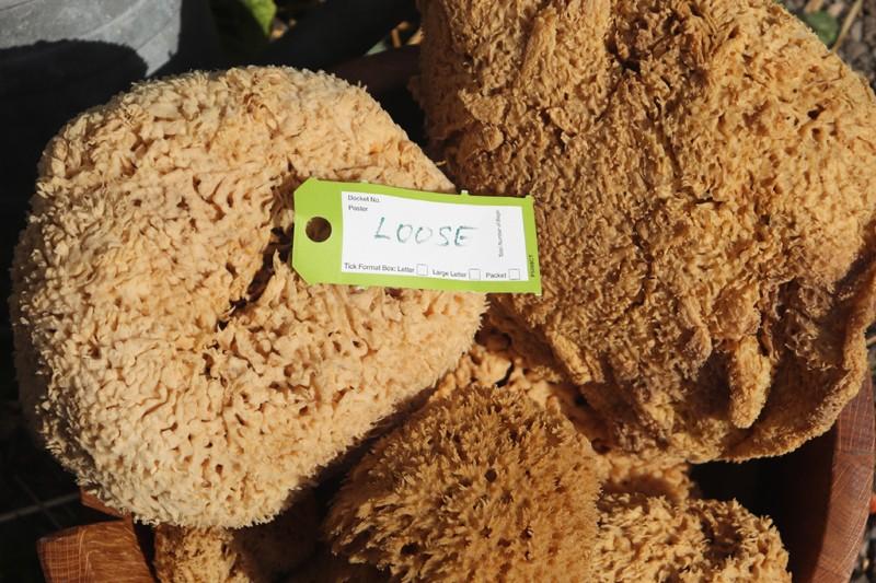 loose sponges