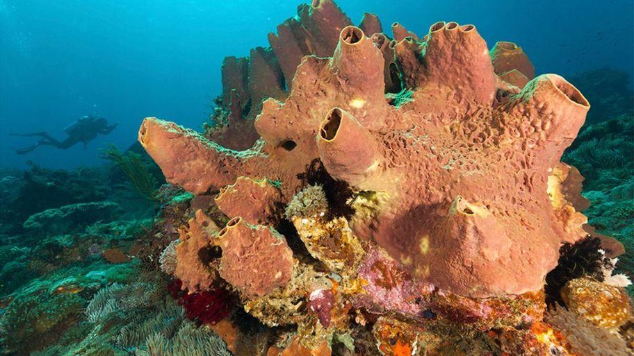 a living sea sponge